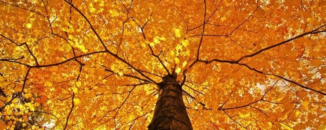 autumn-2013-wallpaper-collection-00
