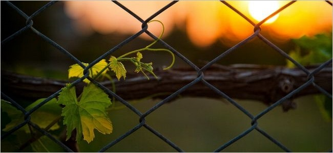 fences-wallpaper-collection-series-two-00
